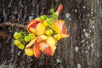 Dieses bunte Ding wächst direkt am Baum - Pentacme Siamensis so ihr Name