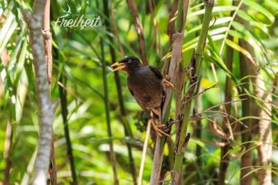Hübscher Singvogel im Park
