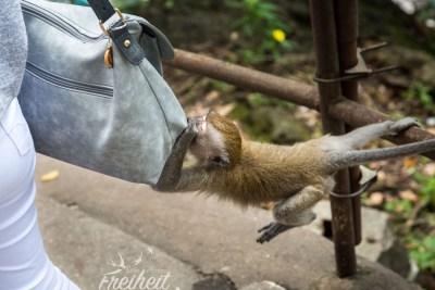 Oh eine Handtasche! Mir doch egal ob das eine Gucci ist ;-)