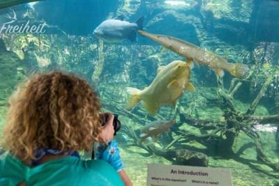 Nadine vor einem Aquarium voller großer Fische...