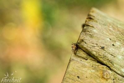 Super kleine süße Spinne