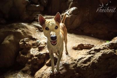 Krabbenhöhle - süßer Hund am Eingang