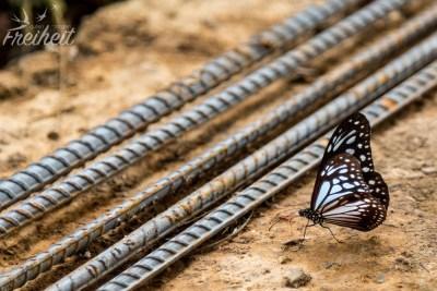 ..und hübsche Schmetterlinge