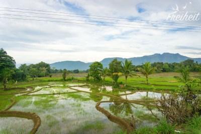 Blick aus dem Busfenster auf Reisfelder...