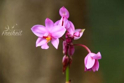 Wilde Orchideen im Dschungel