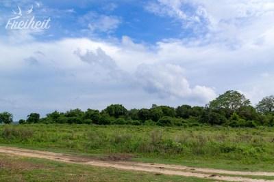 Kaudulla Nationalpark