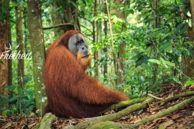 Bis zu 90kg kann das Männchen werden