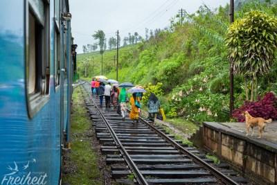 Gleise sind wie Gehwege und werden ständig benutzt. So oft fahren Züge nicht, und wenn einer kommt hört man ihn schon weit im Voraus ;-)