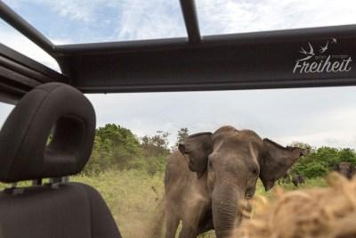 Elefantendame sprintet auf uns zu - zum Glück ist alles gut gegangen
