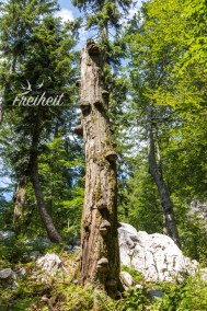 Überall wachsen fette Baumpilze an den Stämmen