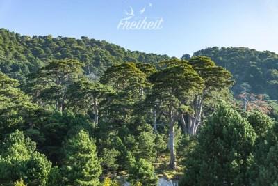 Tolle Pinienwälder