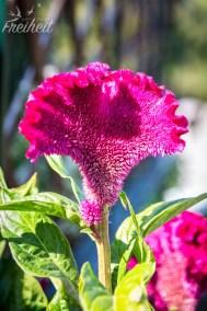 Tolle Blumen in der Gartenanlage des Klosters