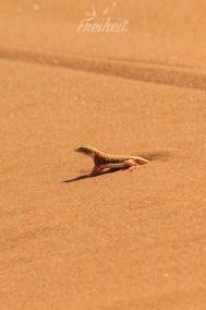 Ja, wer kommt da aus dem Sand?