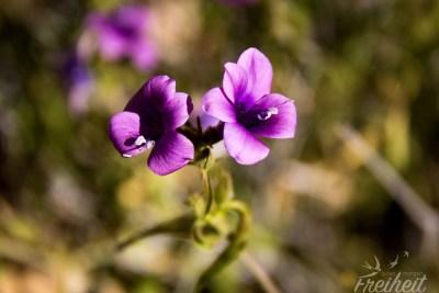 Wo Schmetterlinge sind, da sind auch Blumen :)