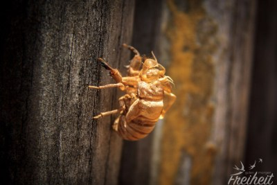...ein Käfer, der sich häutet!