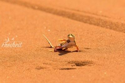 Die Wüste lebt ;-)