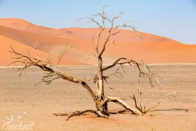 Toter Baum Nahe der Düne 45