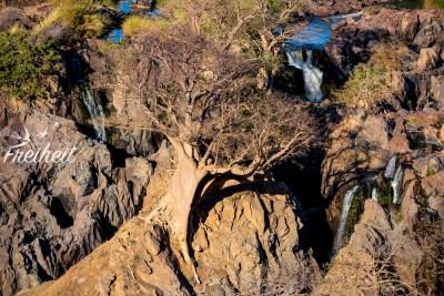 Überall wachsen Baobab Bäume zwischen den Felsen