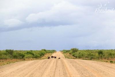 Kühe und Ziegen müssen sich mit uns die Straße teilen ;-)