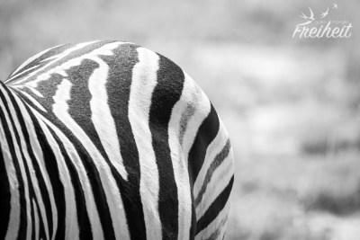 Auch ein schöner Rücken kann entzücken :)
