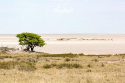 Salzpfanne im Etosha Nationalpark