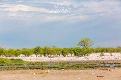Eins von vielen Wasserlöchern im Nationalpark