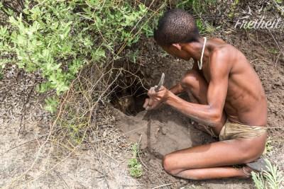 Einer der beiden Jäger gräbt die Frucht aus