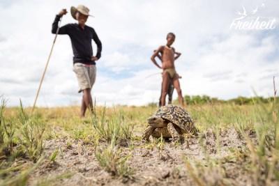 Eine Schildkröte!