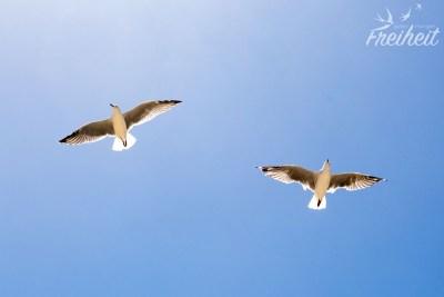 Extrem böig, aber die Möwen fliegen wie die Götter :-P