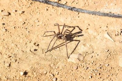Großes Spinnenexemplar