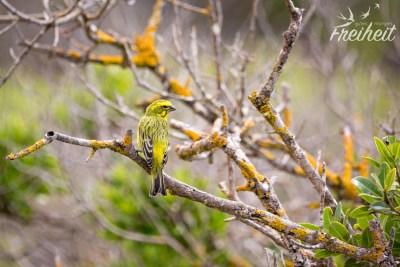 Einer von 260 Vogelarten, die im De Hoop Nationalpark heimisch sind