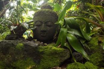 Botanischer Garten, Hawaii