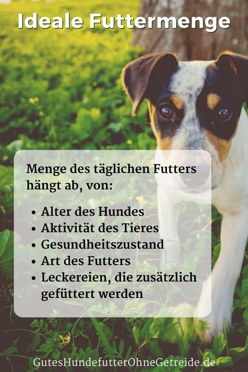 Wieviel Gramm Nassfutter Braucht Ein Hund Am Tag