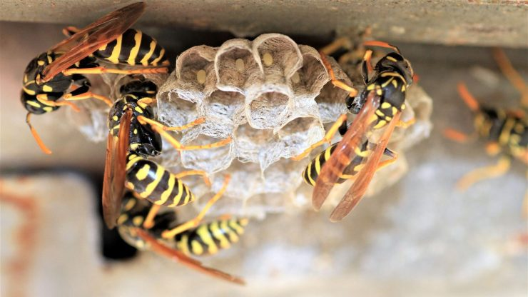 how do I get rid of wasps