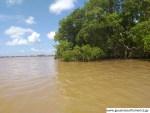 Demerara River - Scenes