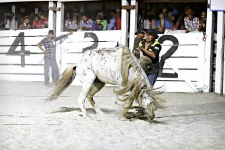 The Rupununi Rodeo: Photos 281-290