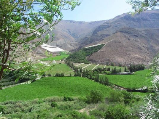 Vallée d'Elqui (photo d'une amie)