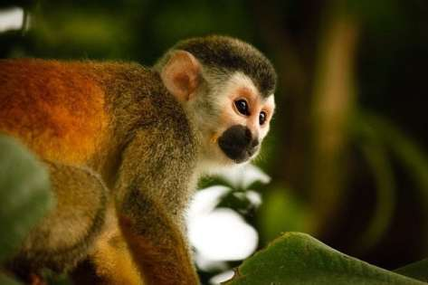 scorpio sign symbol monkey