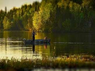 fisherman trees fall