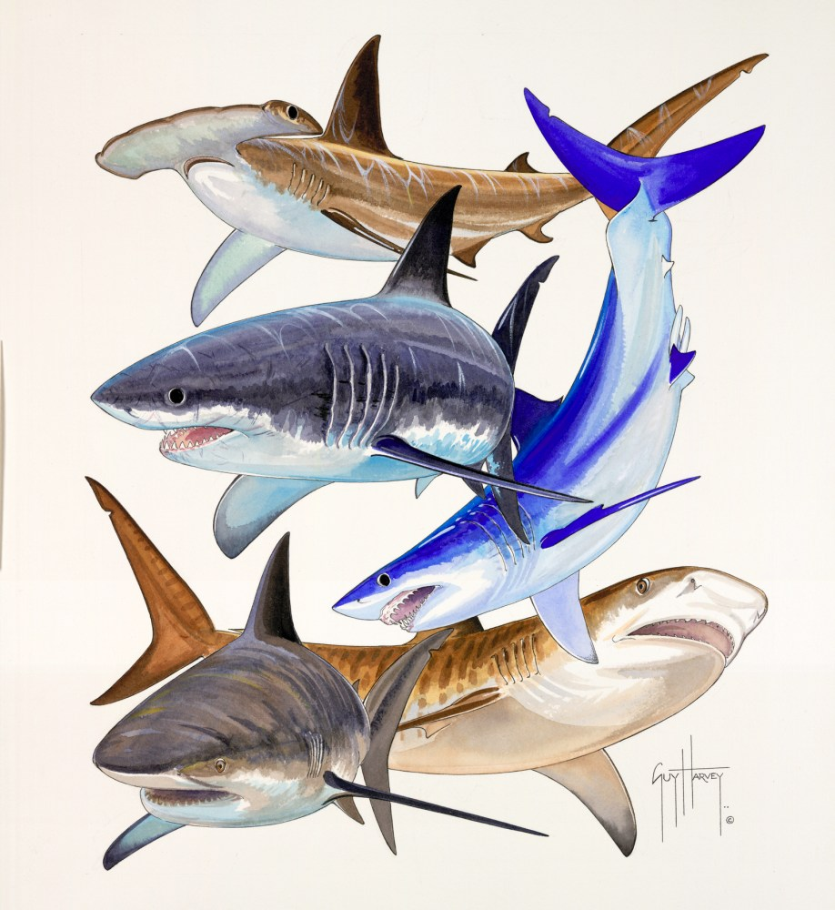 Guy Harvey (3/5)