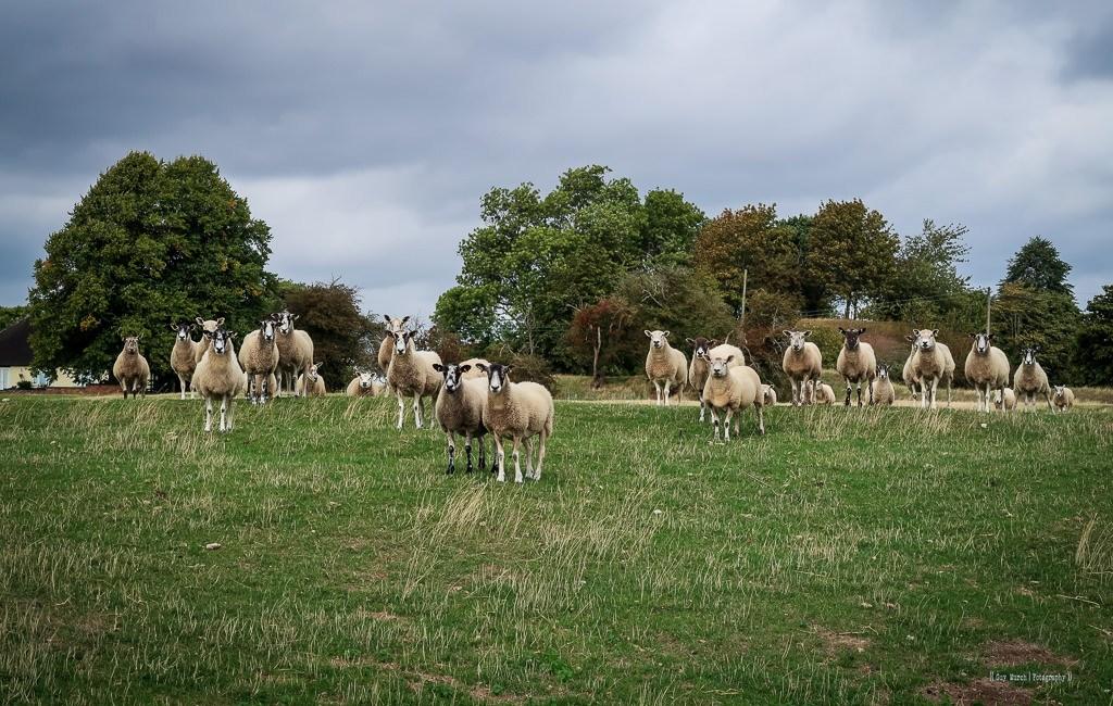 Seckington – Warwickshire
