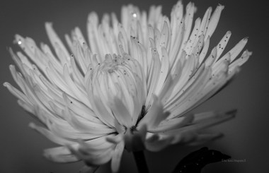 Floral Photography – 5 Tips