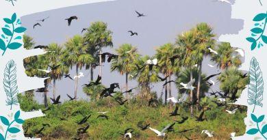 Santoral de la Fauna Paraguaya: las aves
