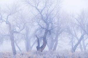 Winter Minuet