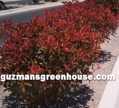 Shrubs Southwest Desert Plants That Do Well In The