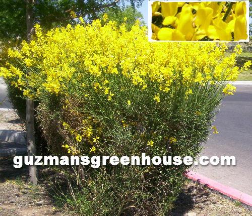 Shrubs Southwest Desert Plants That Do Well In The Desert Southwest