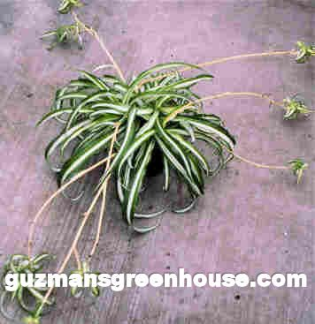 Best Indoor Low Maintenance Plants