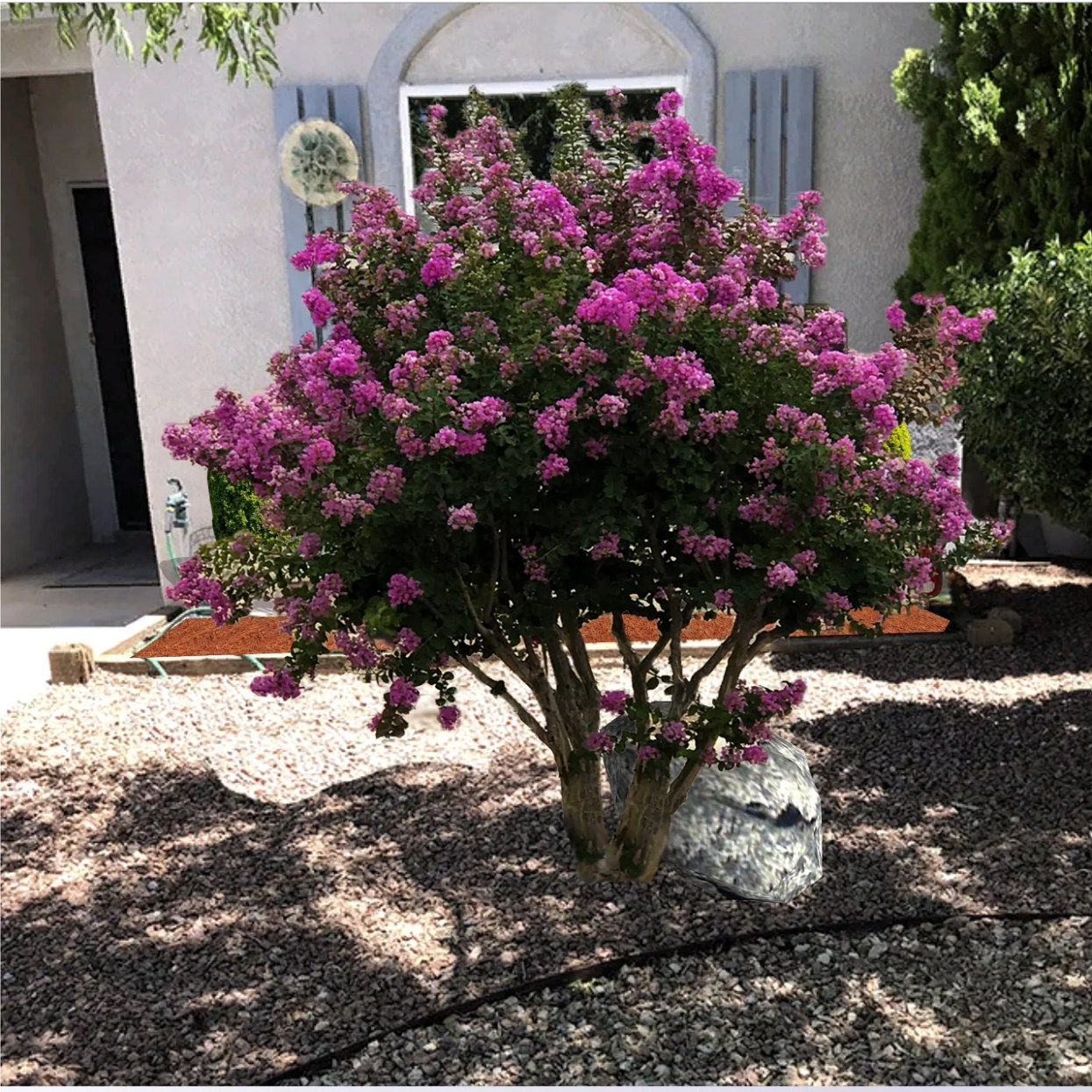 Landscaping with Crape Myrtles