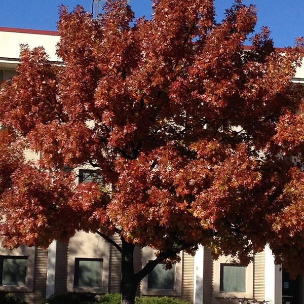 Fall Colors in Las Cruces