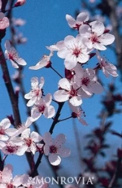 Early Blooming Trees and Plants